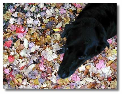 Dog confetti