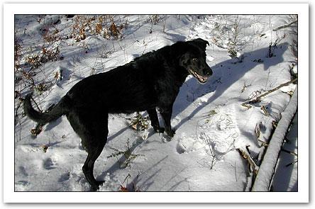 Happy Snow Dog