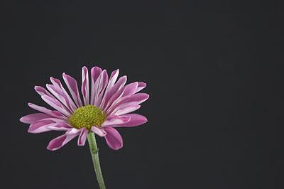 Flower - black bkgrnd