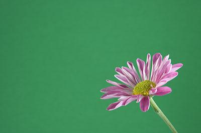 Flower - dark green bkgrnd
