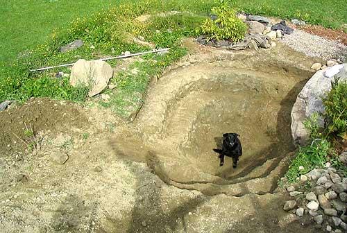 how to build a dog pond