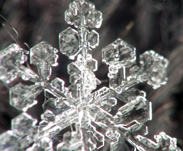 Snowflake closeup 2