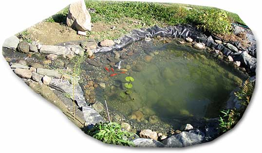 Installing a backyard pond for Koi pond insert