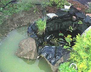 Pond collapse