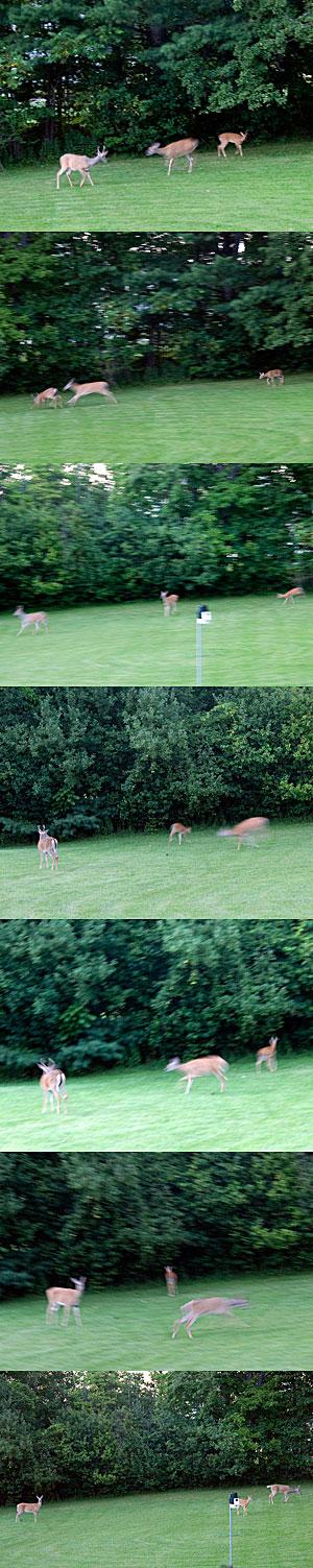 Deer Family Follies