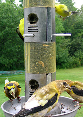Bird Social