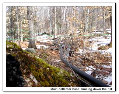 Main hose snaking through woods