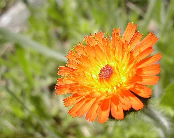 Vivid Orange Blossom